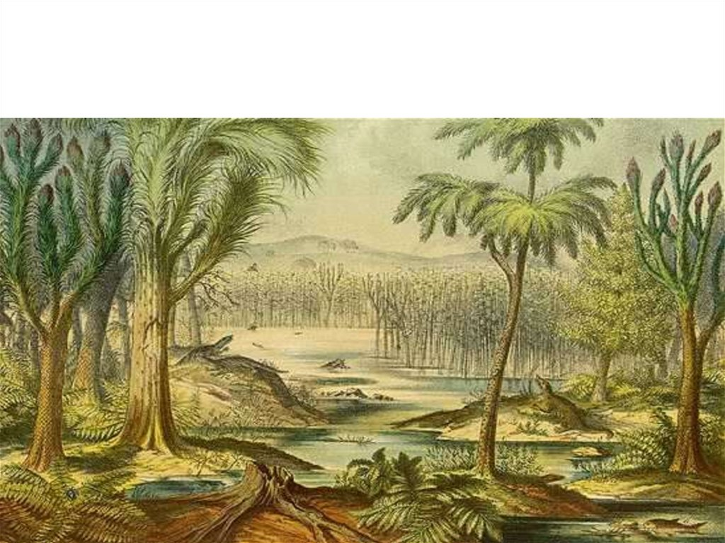 Флора мезозойской эры картинки