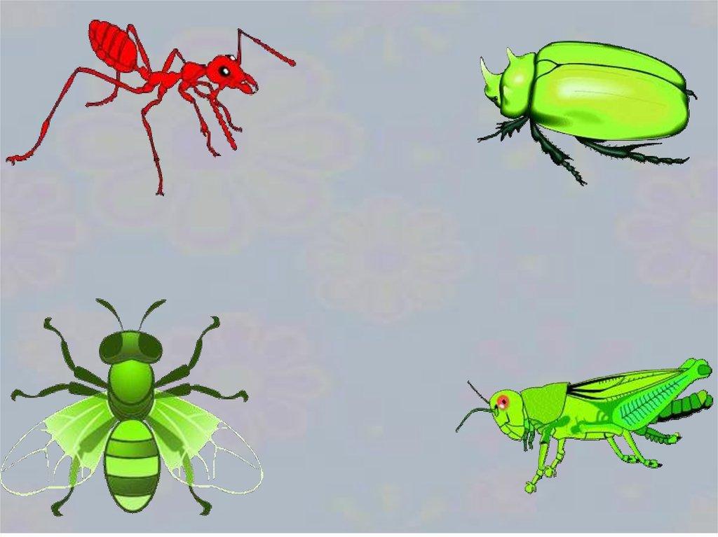 могу картинка четвертый лишний насекомые взрослыми