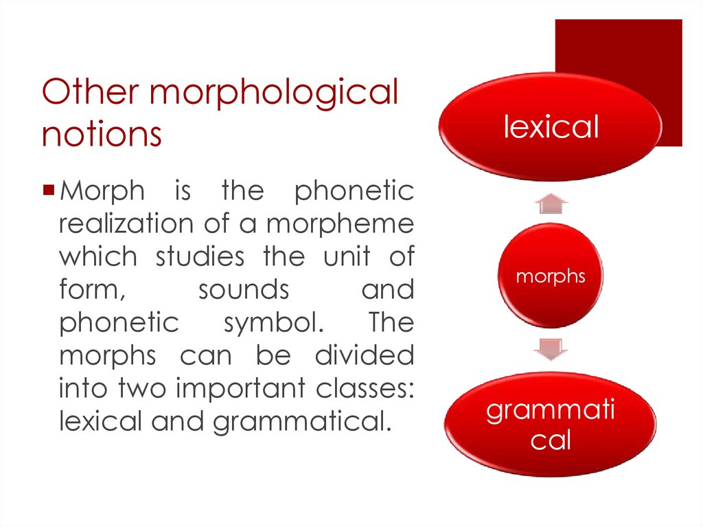 Other morphological notions