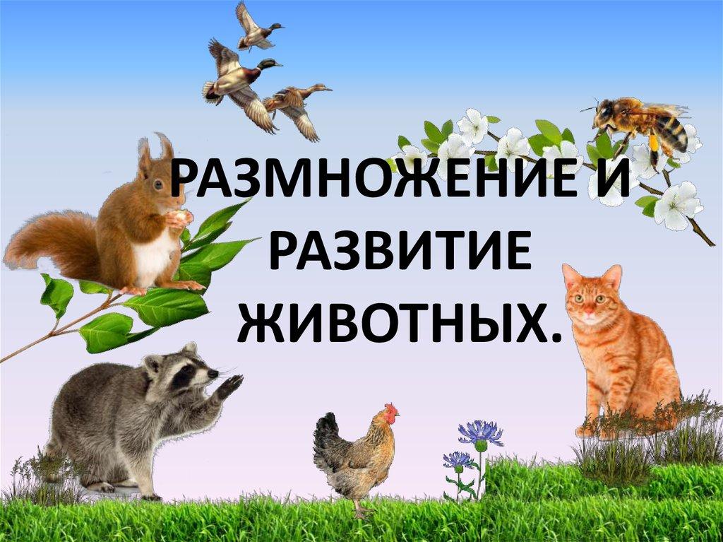 размножение и развитие животных фото