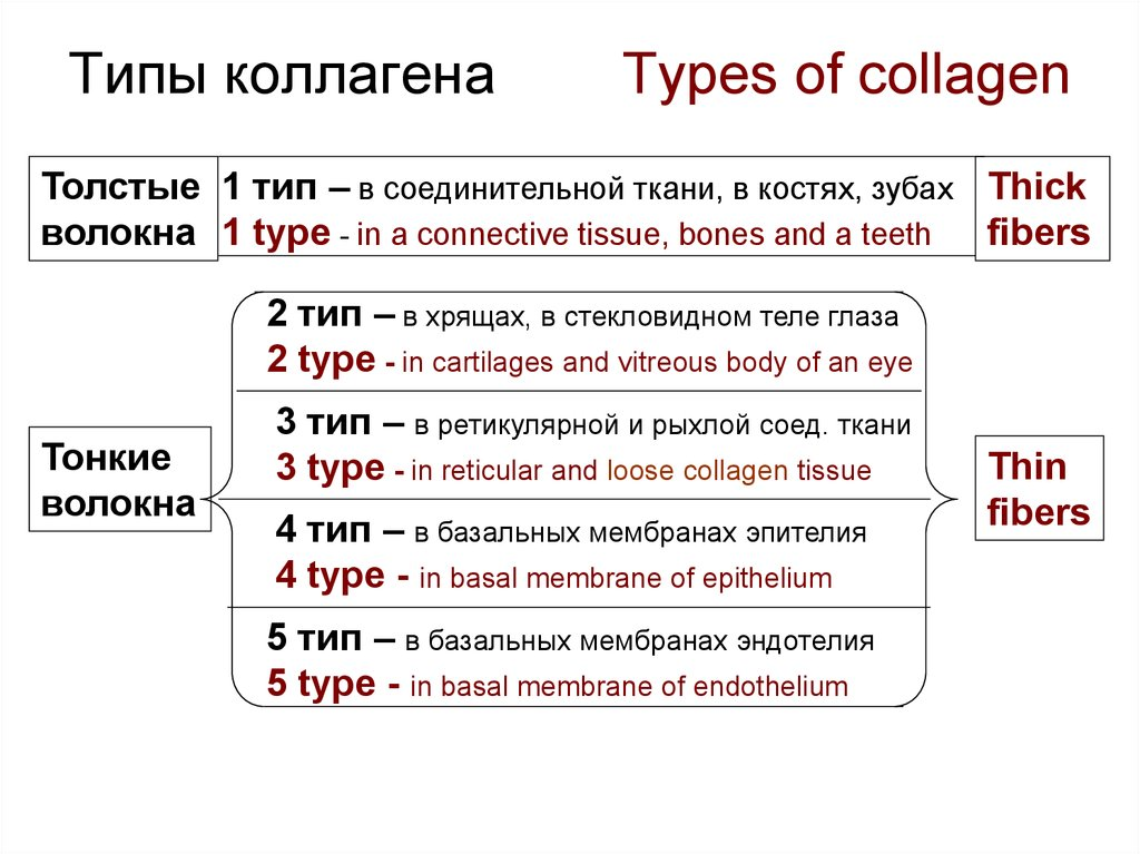 Типы коллагена Types of collagen