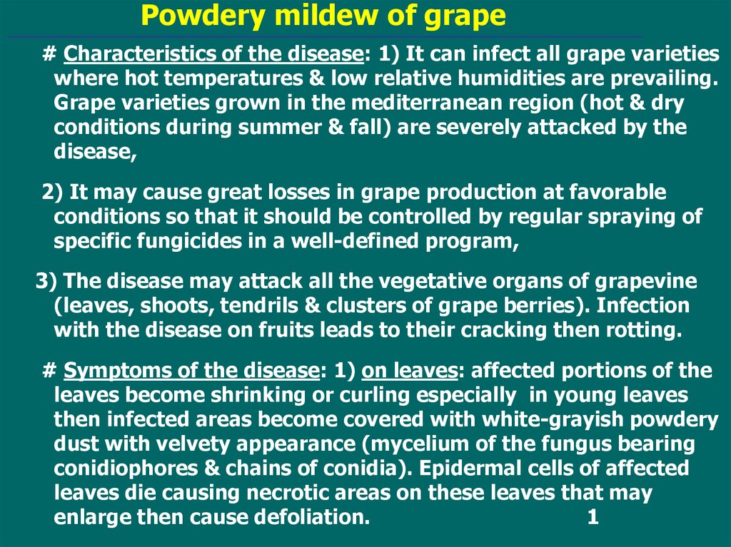 Powdery mildew of grape - презентация онлайн