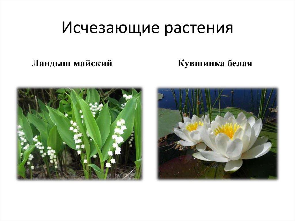 стараюсь растения на грани исчезновения в россии с картинками растяжку для женщины