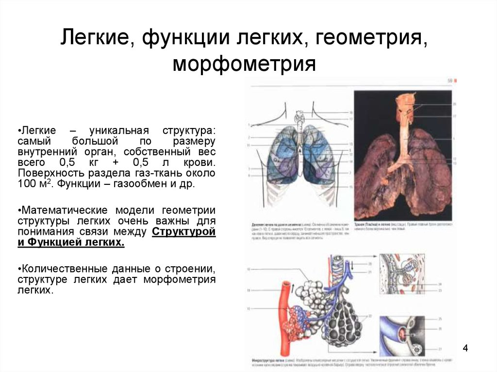 Функции легких картинки