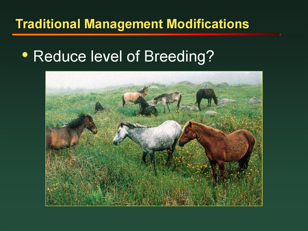 Traditional Management Modifications