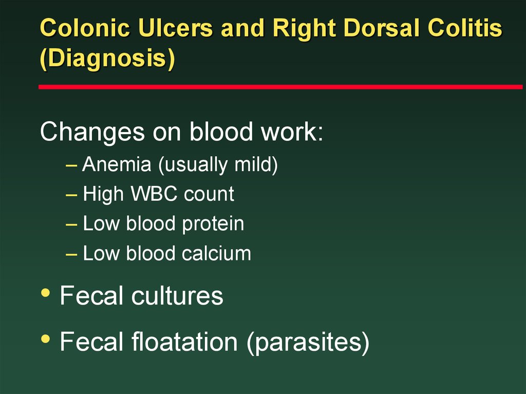 Colonic Ulcers and Right Dorsal Colitis (Diagnosis)