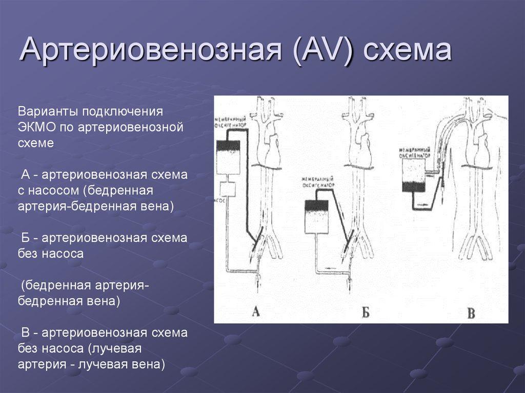 Артериовенозные теплообменники теплообменники с плавающей головкой п