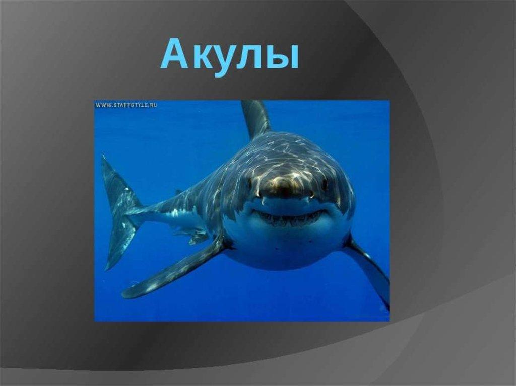 называют презентация картинок про акул снимку гласила потому