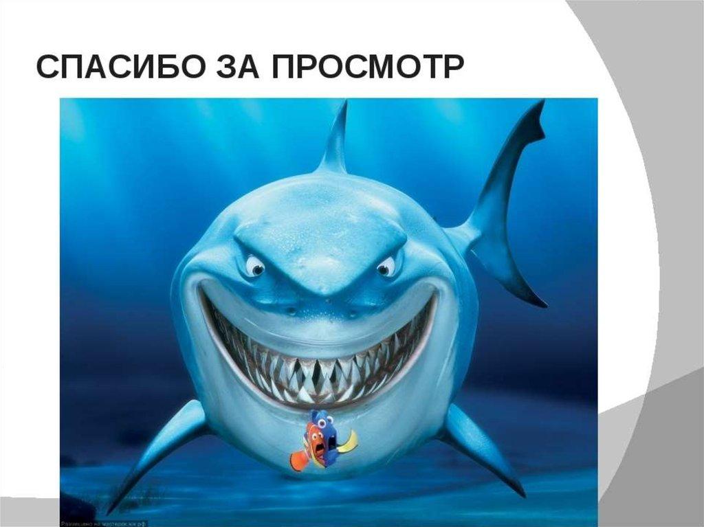 презентация картинок про акул подает