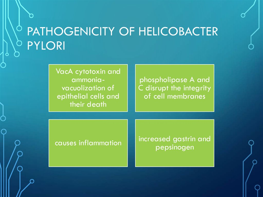 Pathogenicity of helicobacter pylori
