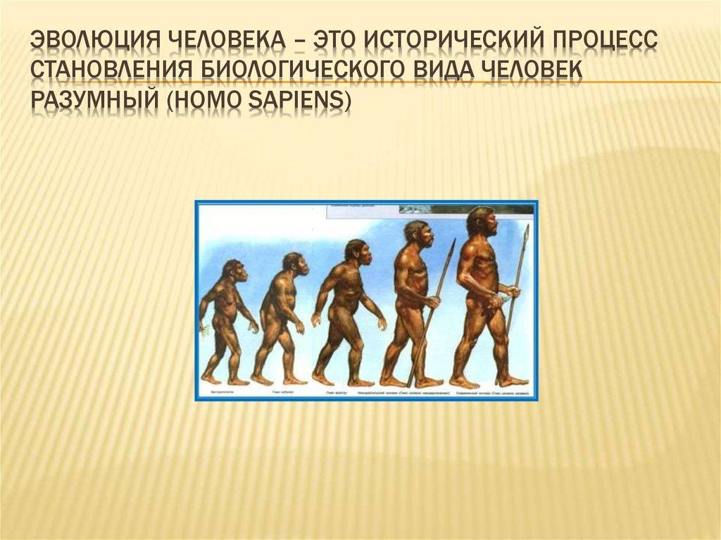 Эволюция человека по гдз