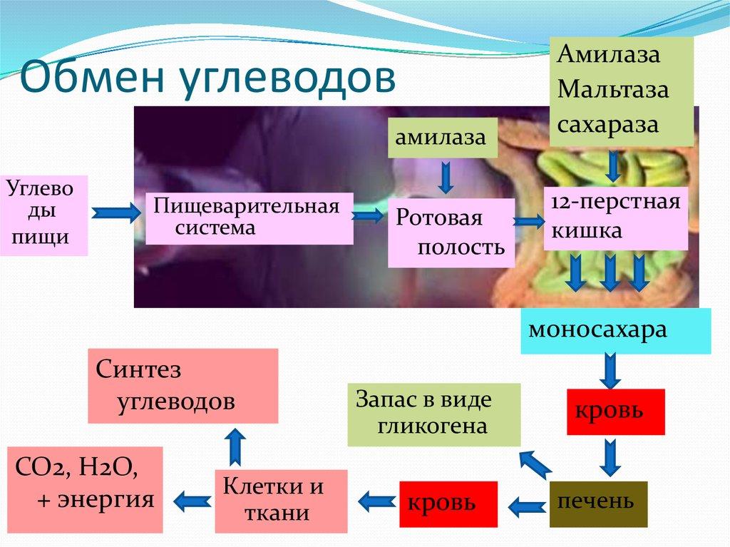 Углеводов шпаргалки. обмен