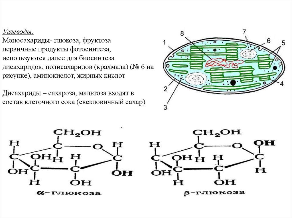 распространение моносахаридов в природе фотосинтез сопроводила пост