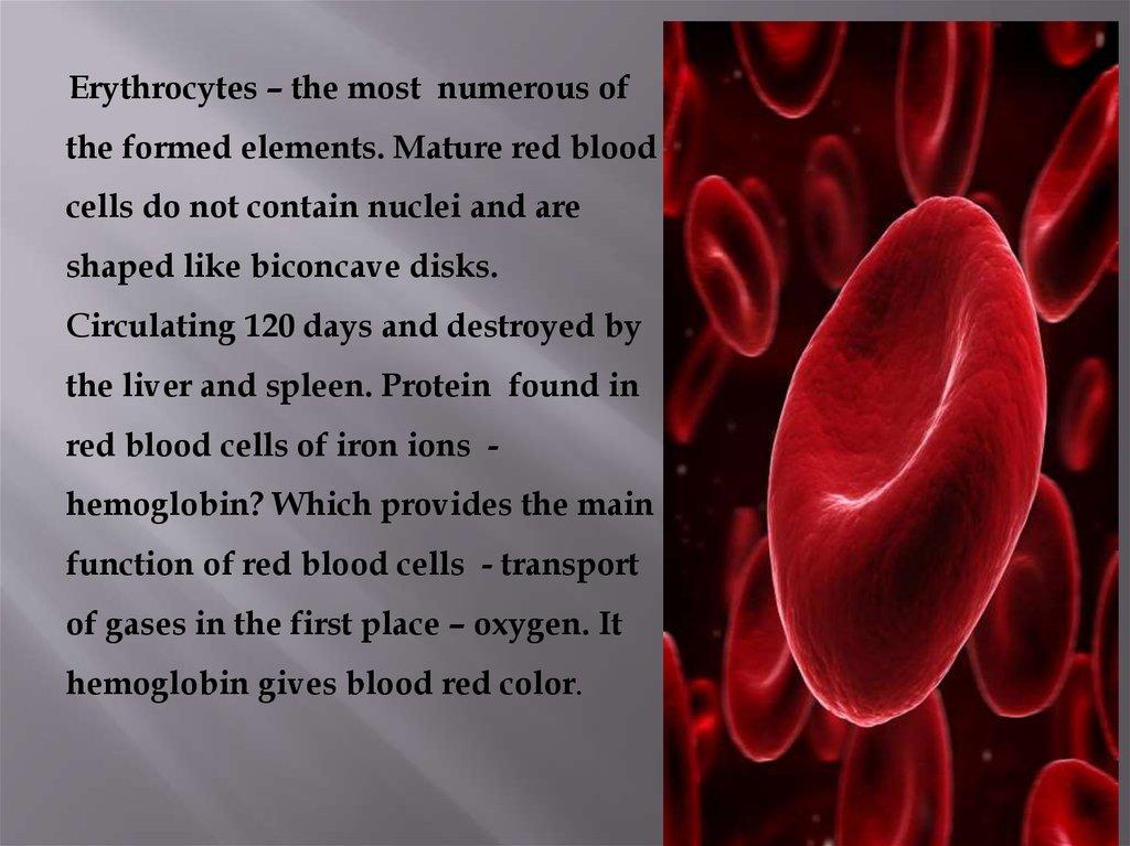 blood  erythrocytes  thrombocytes  leukocytes