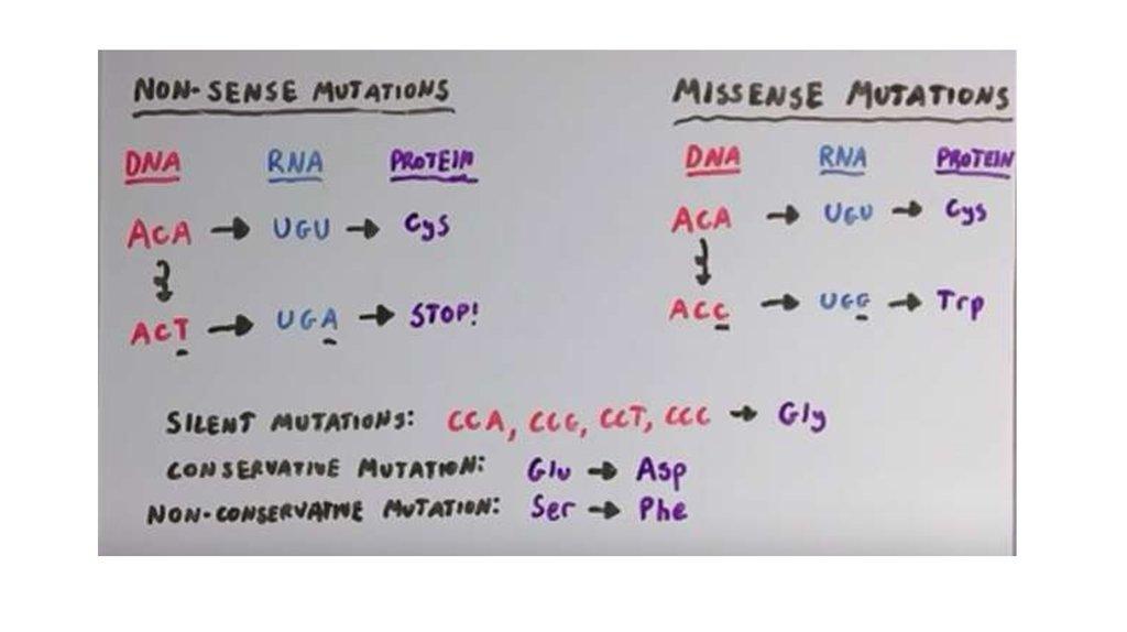 The mechanism of chromosome, gene mutation. The theory of mutation ...