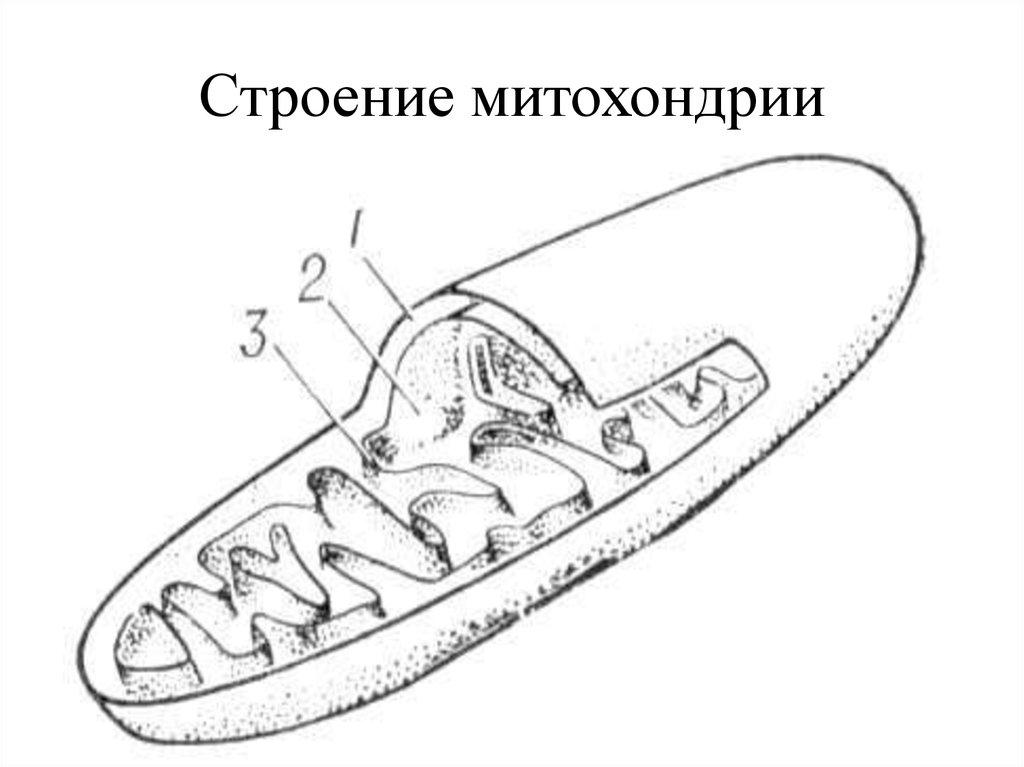 mitochondria npr On news 889 knpr on classical 897 news.