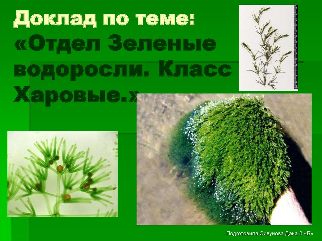 Доклад о водорослях 7 класс