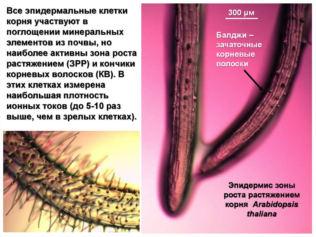 book Gynecological Drug