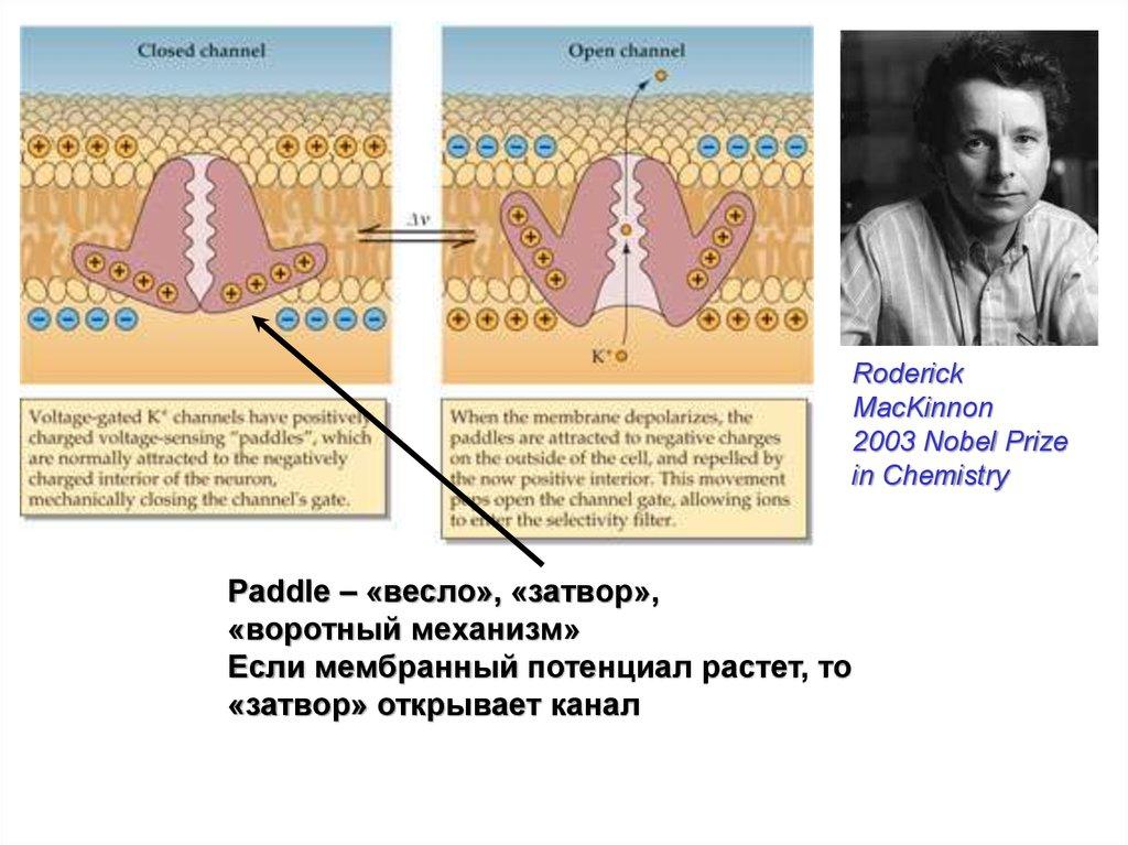 ebook Флора Сыдинской предгорной и Прибайкальской