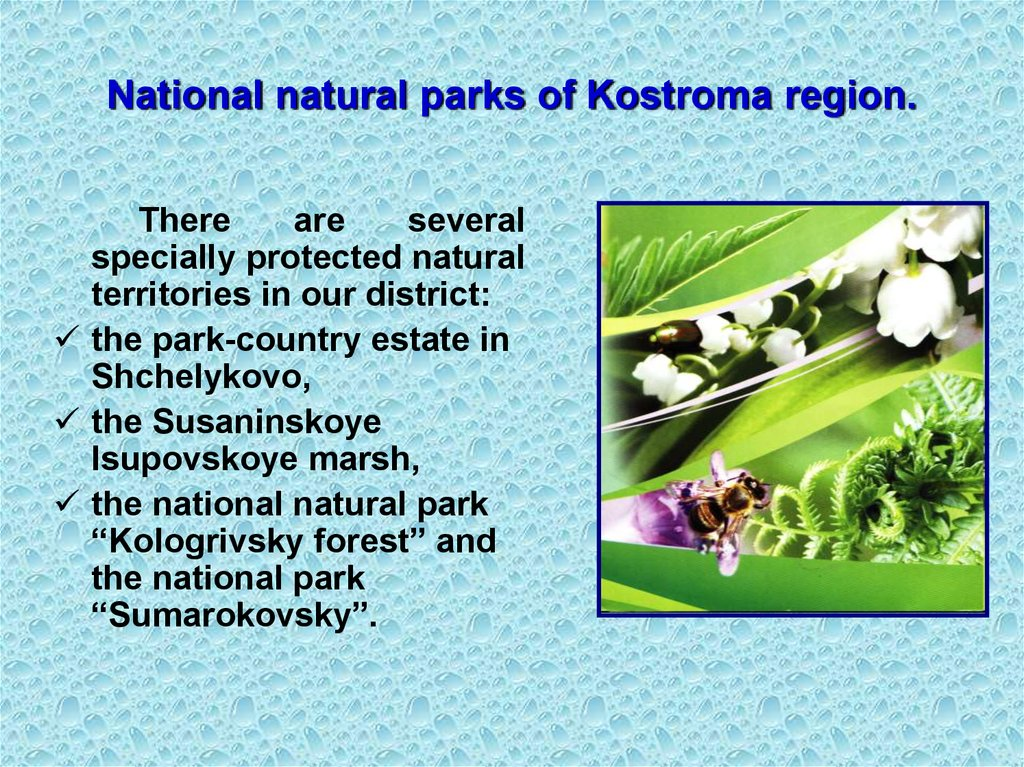 National natural parks of Kostroma region.