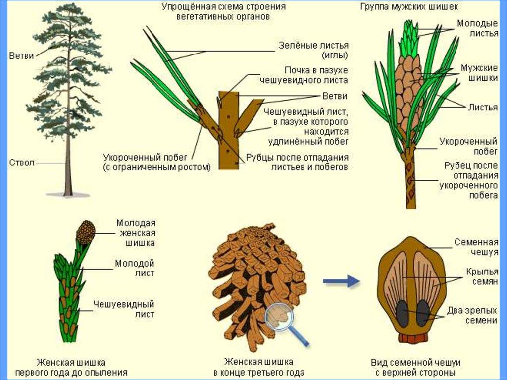 царство растений 6 класс биология