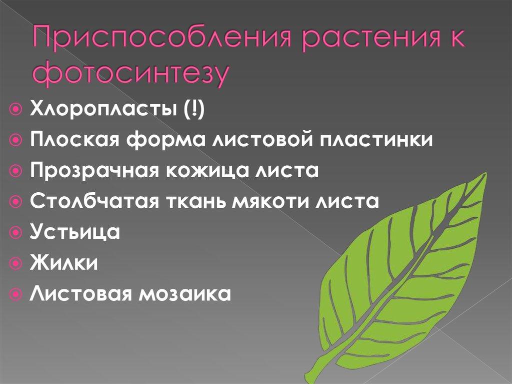 растения не способные к фотосинтезу анализатор состоит
