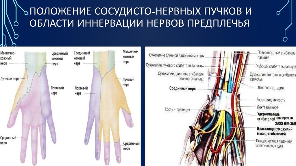 Разрыв нервов лучезапястного сустава растягивание сустава хруст