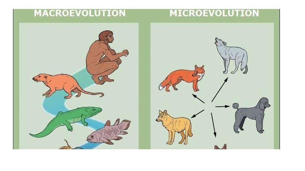 The Evidence For Evolution Online Presentation