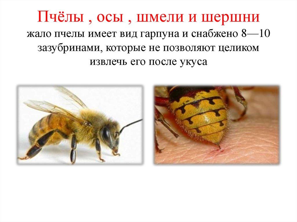 Изменения в анализе крови после укуса осы Справка от гинеколога Улица Юннатов