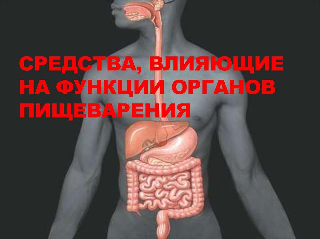 Сперма в процессе пищеварения