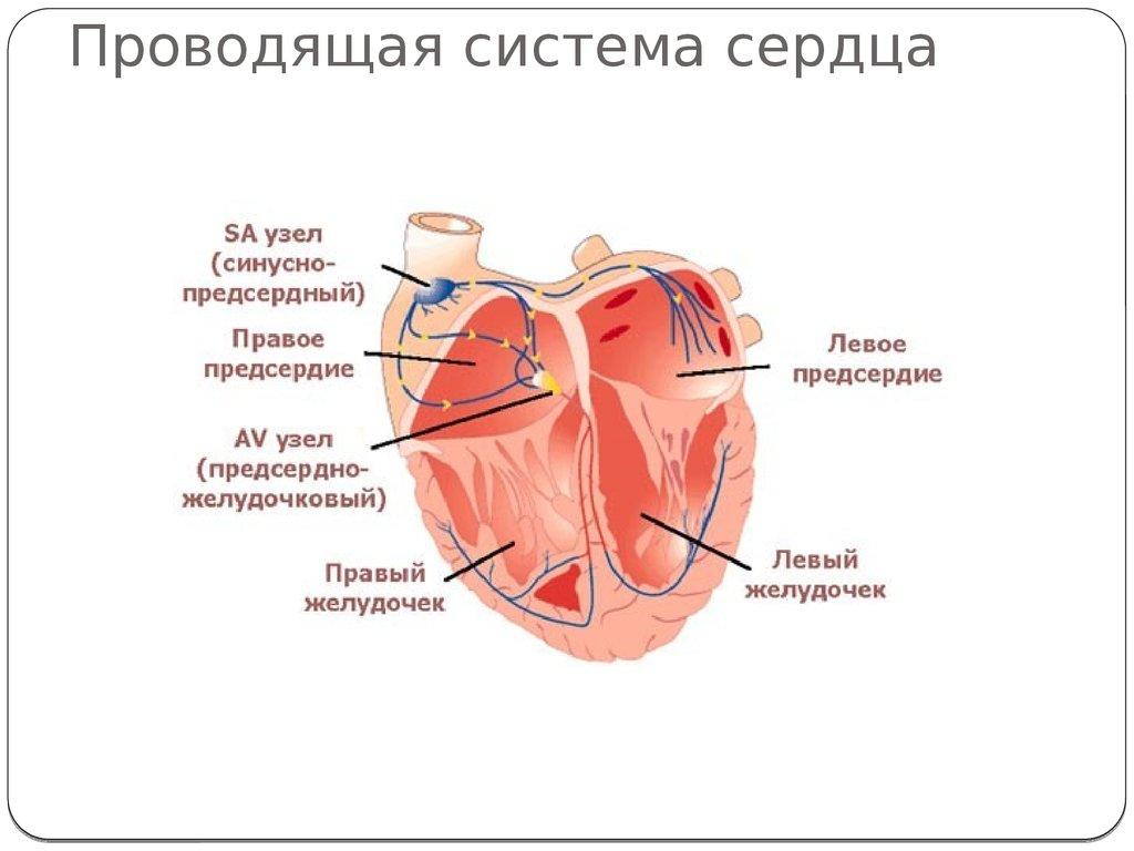 Блокады сердца — Причины, симптомы и лечение