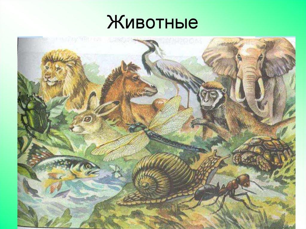 какие из указанных царств живой природы вам уже знакомы