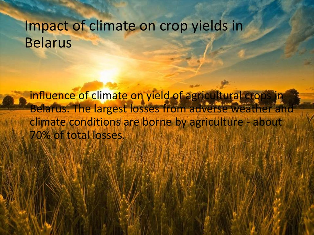 Impact of climate on crop yields in Belarus