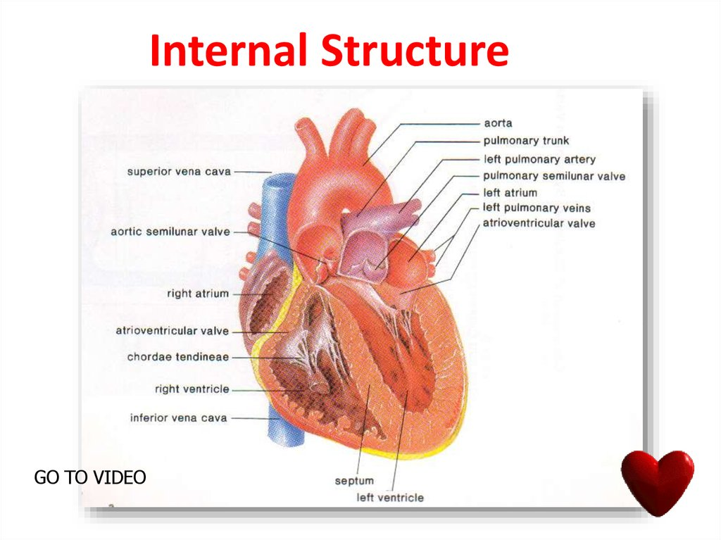 Internal Structure