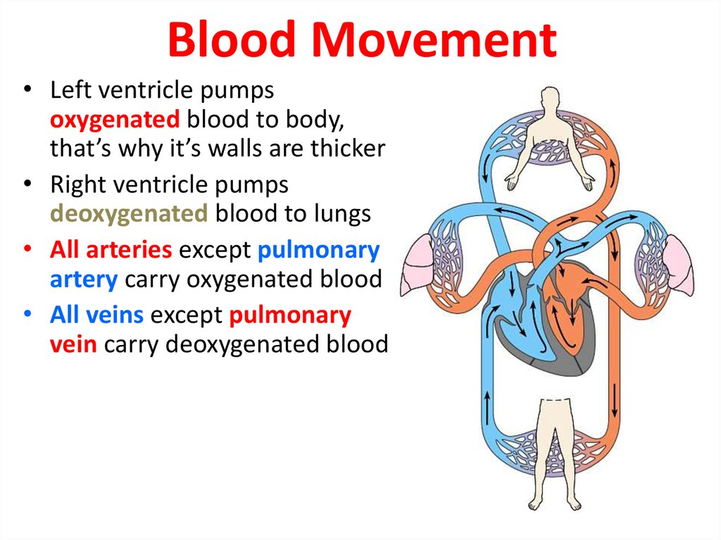 Blood Movement