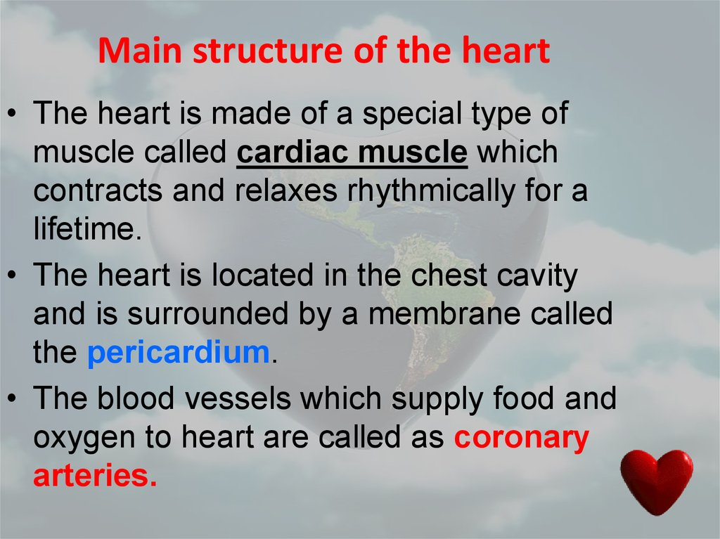 Main structure of the heart
