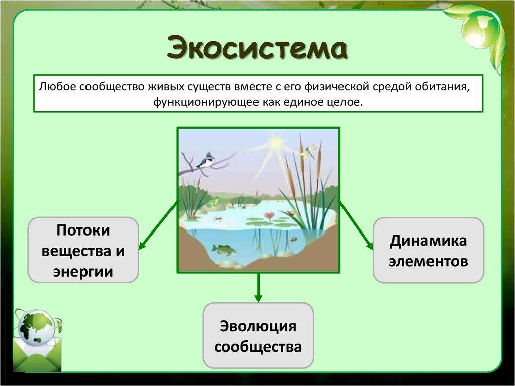 Картинки на тему экосистемы