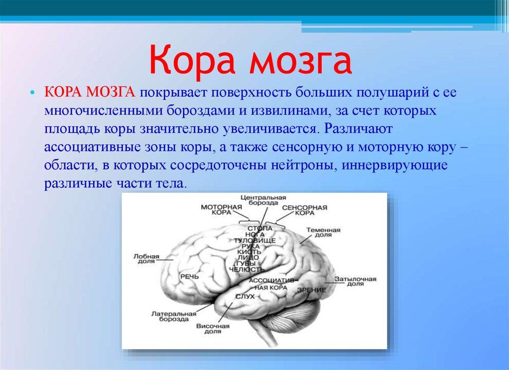 Признаки раздражения коры головного мозга