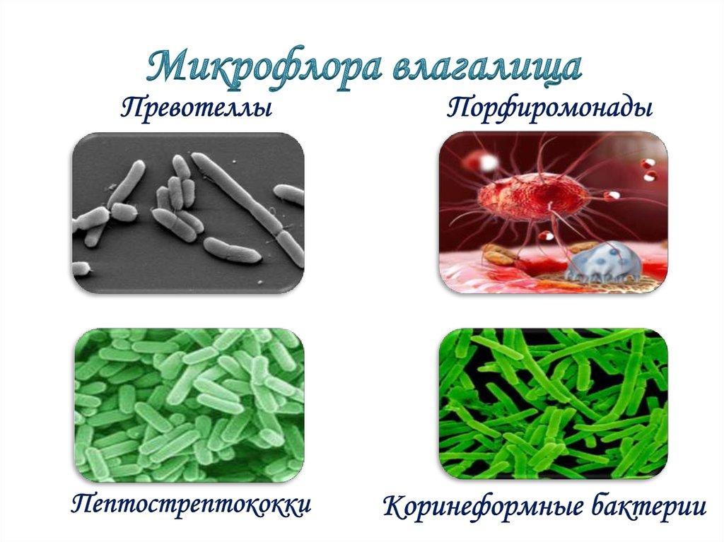 Вагина микрофлора