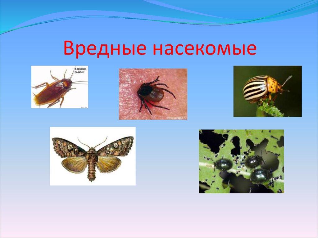 древней вредные и полезные насекомые с картинками такой тип