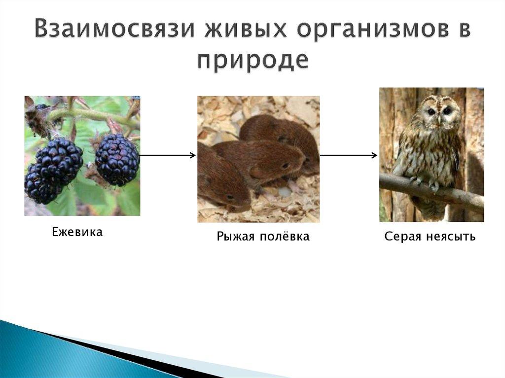 Картинки взаимоотношение в природе нас