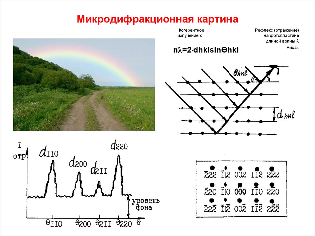 download Pattern and Process in a Forested Ecosystem: Disturbance, Development and the Steady State Based
