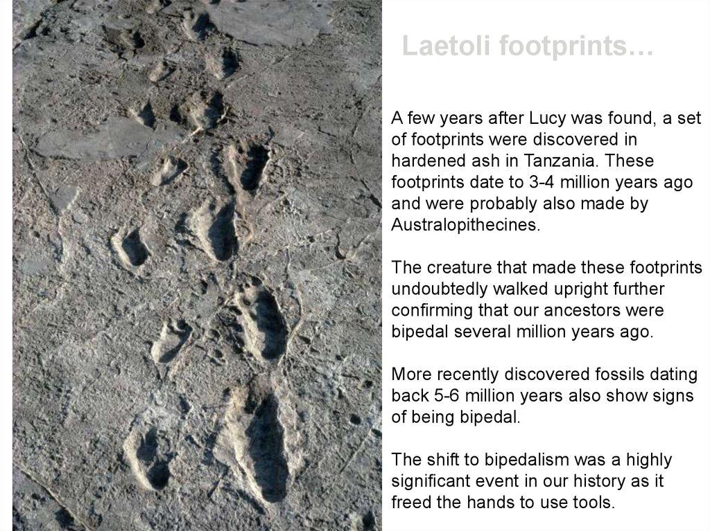 Laetoli footprints dating #5