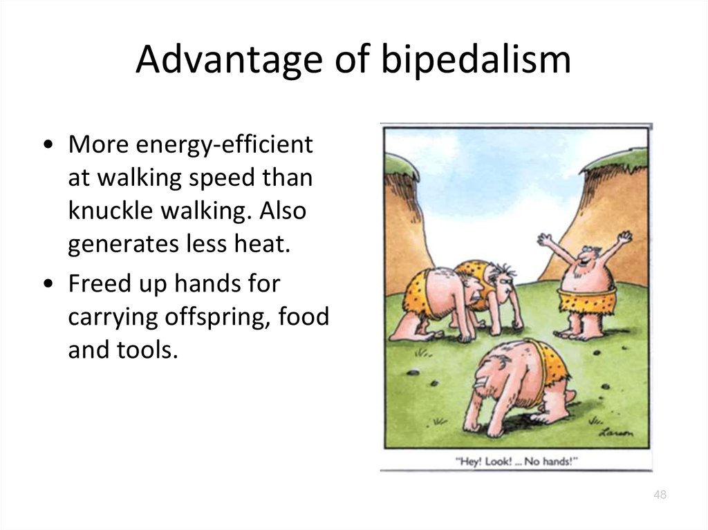 bipedalism vs. quadrapedalism essay Why be bipedal 01 feb 2005 the skeletal adaptation to bipedalism is well documented in early hominids what is less clear is what events led to this adaptation and.
