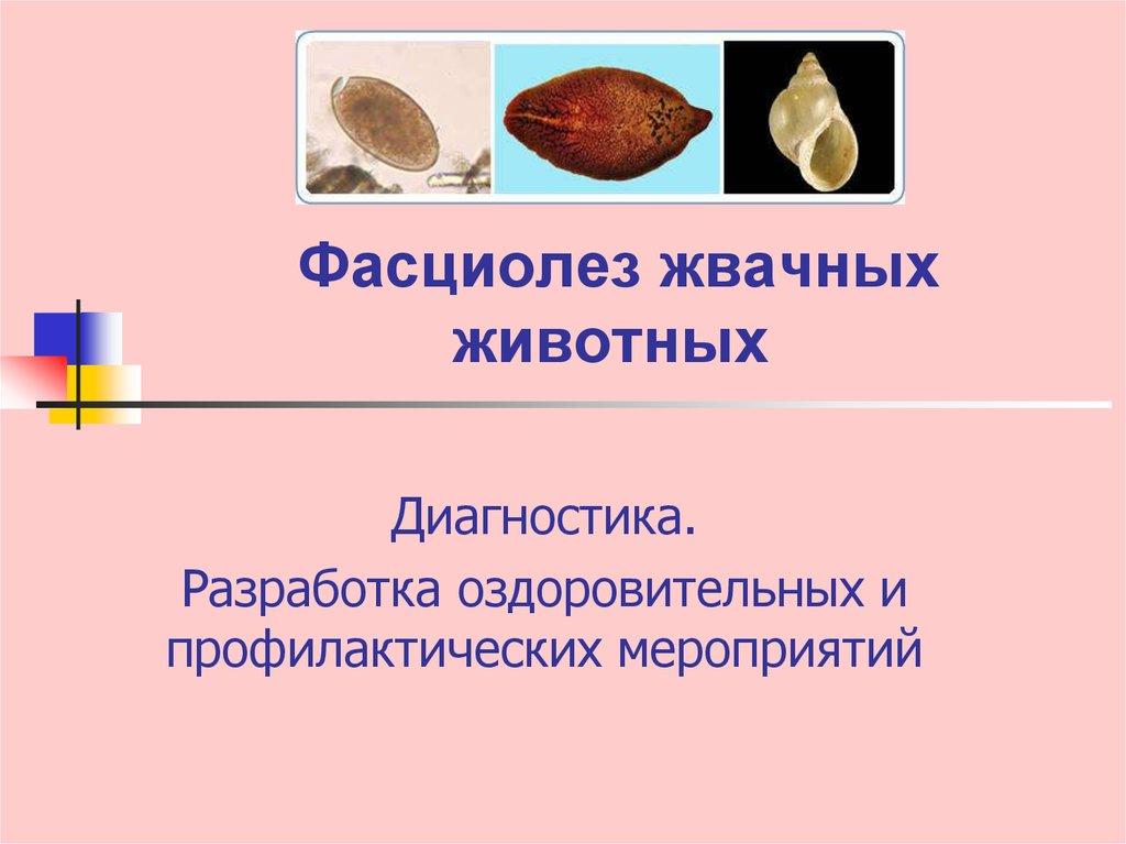 Etiologia fascioliozei, Fascioliasis (fasciola, fluke hepatic, fluke gigant)