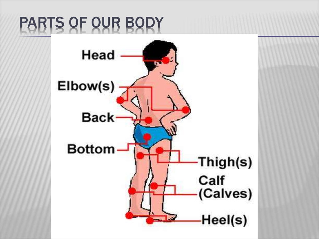 Health Parts Of Our Body Online Presentation