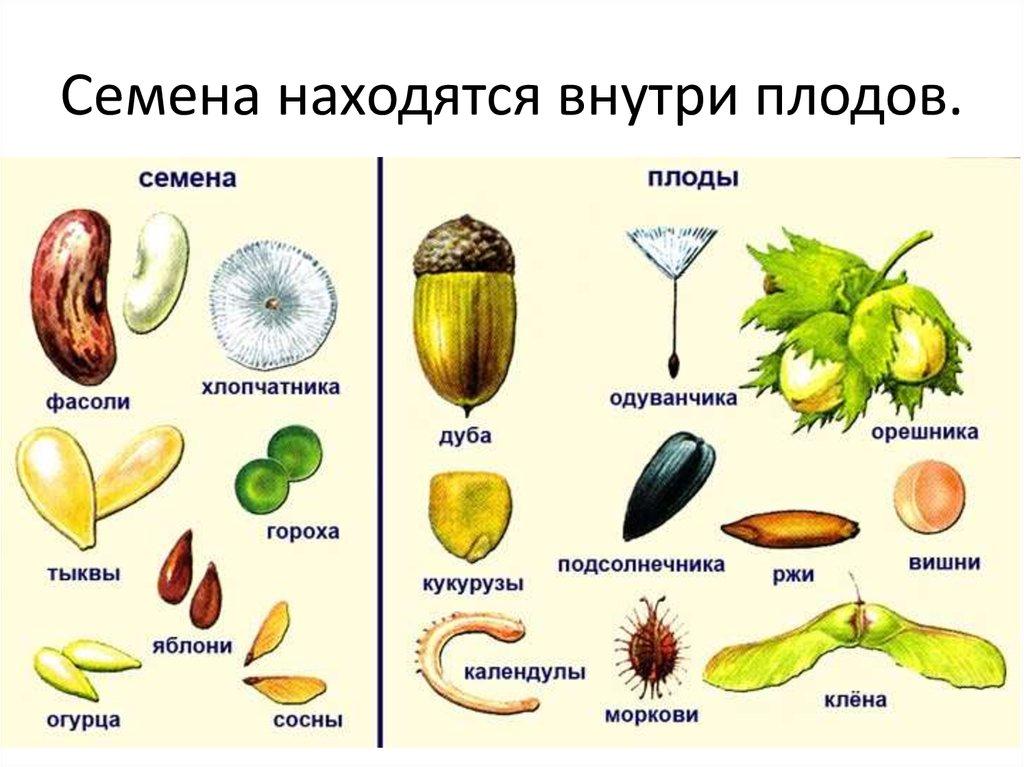 величие картинки плодов растений с названиями фото или