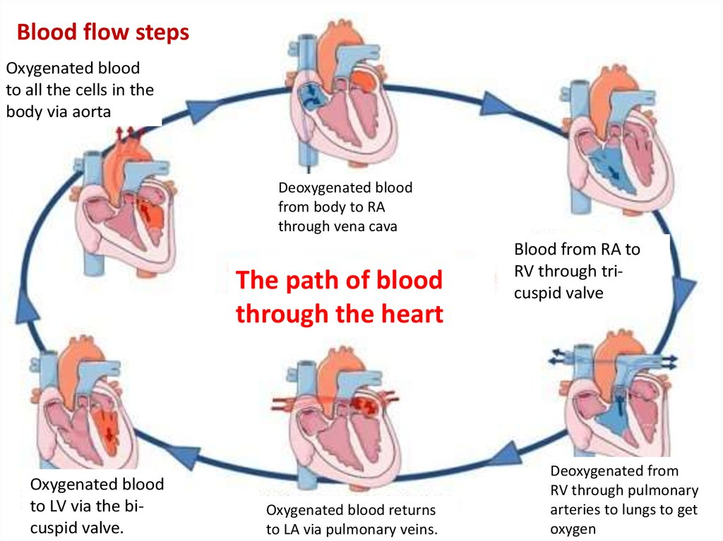 Electrical Processes Of The Heart Online Presentation