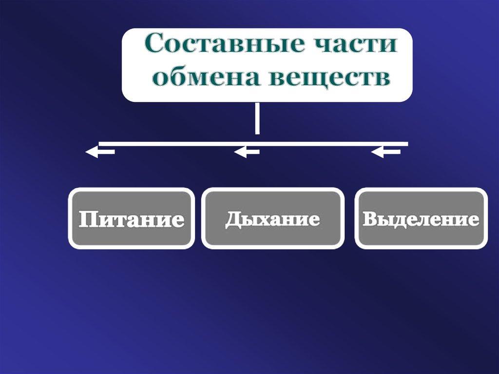 5942a9352106 Обмен веществ и энергии - online presentation