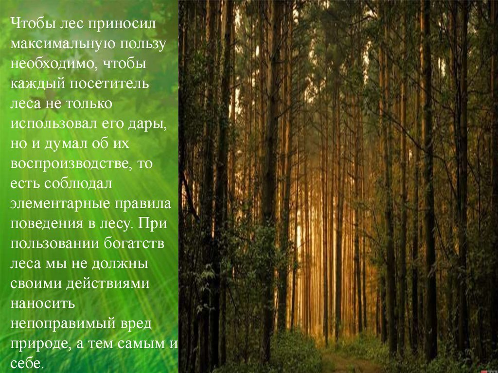 Фото лес эро